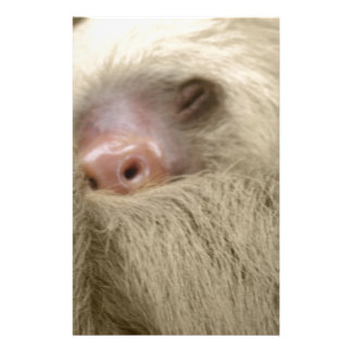 sleeping sloth customized stationery