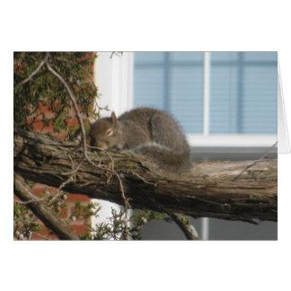 Sleeping Squirrel Card