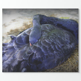 Sleeping Swan Wrapping Paper