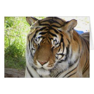 Sleeping tiger card (h)