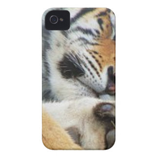 Sleeping Tiger iPhone 4 Cases