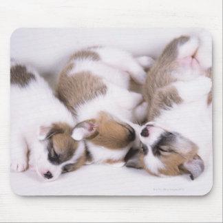Sleeping welsh corgi puppies mouse pad