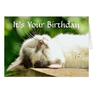 Sleeping White Cat Birthday Card