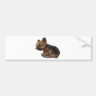 Sleeping Yorkie Bumper Sticker