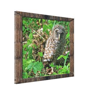 Sleepy Baby Barred Owl Canvas Print