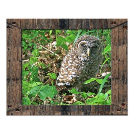 Sleepy Baby Barred Owl Photo Print