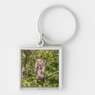 Sleepy Barred Owl Keychain