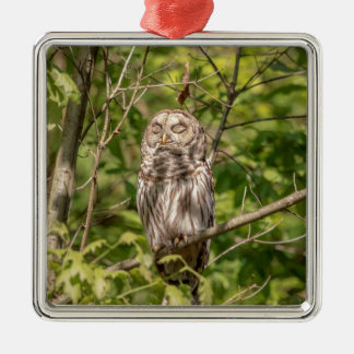 Sleepy Barred Owl Metal Ornament