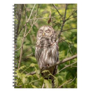 Sleepy Barred Owl Spiral Notebook