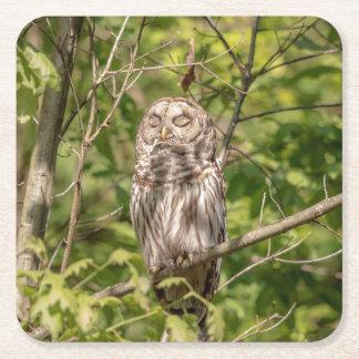 Sleepy Barred Owl Square Paper Coaster