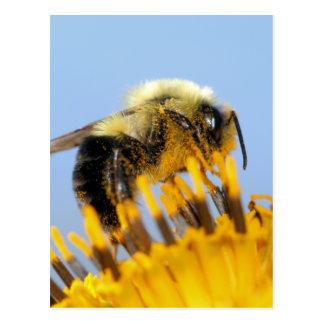 Sleepy Bee Postcard
