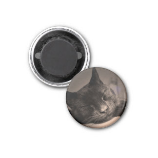 Sleepy Black Cat Magnet