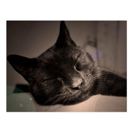 Sleepy Black Cat Photo Postcard