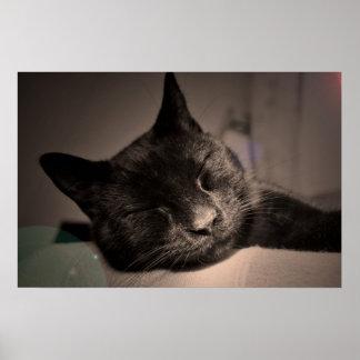 Sleepy Black Cat Poster