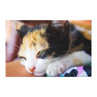 Sleepy Calico Kitten Gallery Wrap Canvas