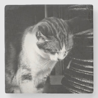 Sleepy Cat - Coaster