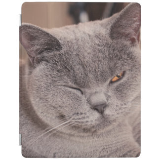Sleepy Cat iPad 2/3/4/ Cover for Women iPad Cover