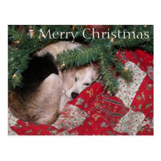 Sleepy Christmas Beagle Postcard