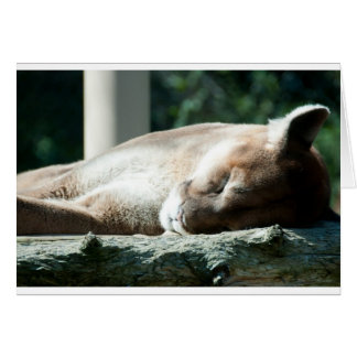 Sleepy Cougar, You're Adorable Card