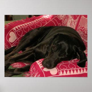 Sleepy Dog Custom Print