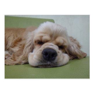 Sleepy Dog Postcard