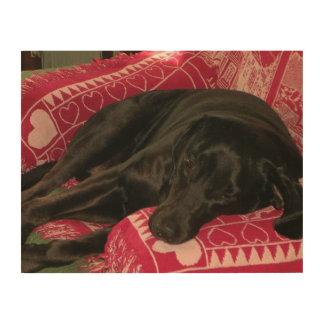 Sleepy Dog Wood Canvas