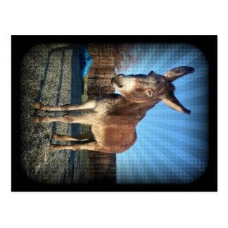 Sleepy Donkey Postcard