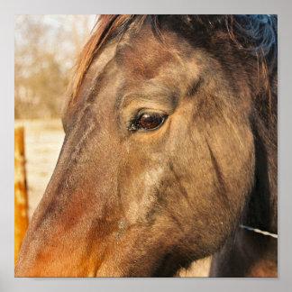 Sleepy Draft Horse Poster