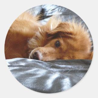 Sleepy Eyed Dog Round Sticker