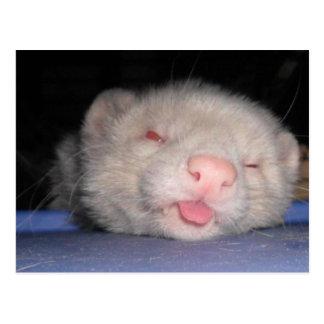 Sleepy Ferret Postcard