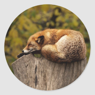 Sleepy Fox Sticker