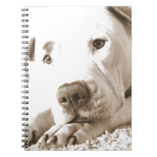 sleepy friendly white pitbull hate deed not breed spiral notebook
