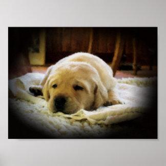 Sleepy Golden Puppy Poster