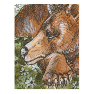 Sleepy Grizzly Bear Postcard
