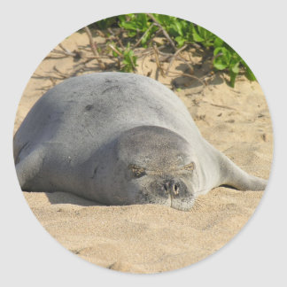 Sleepy Hawaiian Monk Seal Round Sticker