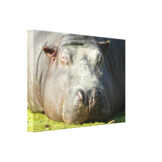 Sleepy Hippo Gallery Wrapped Canvas