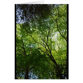 Sleepy Hollow trees Card