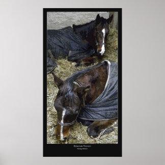 Sleepy Horses Posters