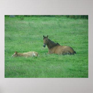 Sleepy Horses Print