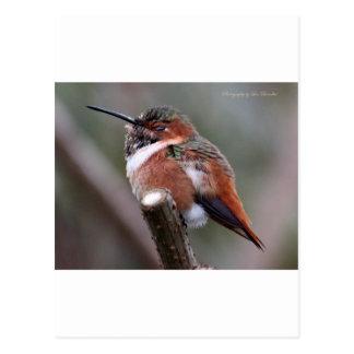 Sleepy Hummingbird Postcard