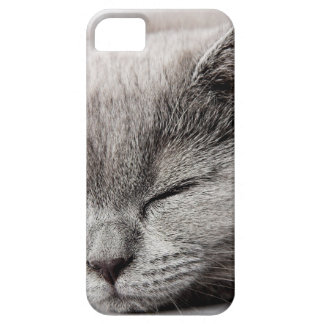 Sleepy Kitten Case For The iPhone 5