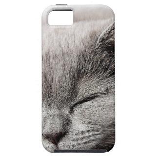 Sleepy Kitten iPhone 5 Cover