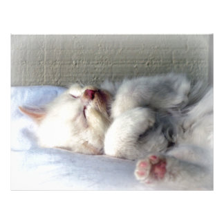 Sleepy Kitten Letterhead