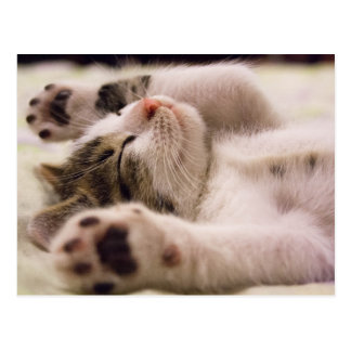 Sleepy Kitten | Paws Stretched Out Postcard