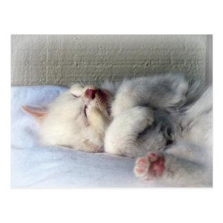 Sleepy Kitten Postcard