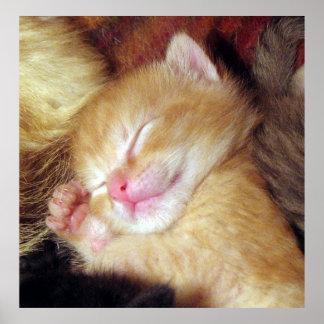 Sleepy kitten posters