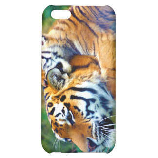 Sleepy Kittens Falling Asleep Together Case For iPhone 5C