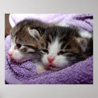 Sleepy kittens poster