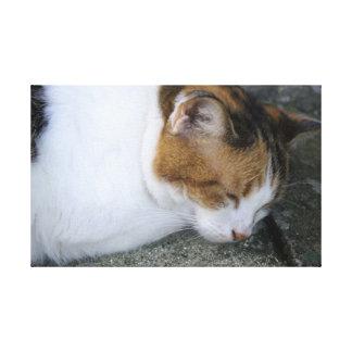 Sleepy Kitty Canvas Prints