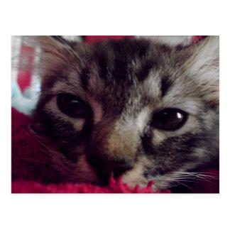 Sleepy Kitty Card Postcard